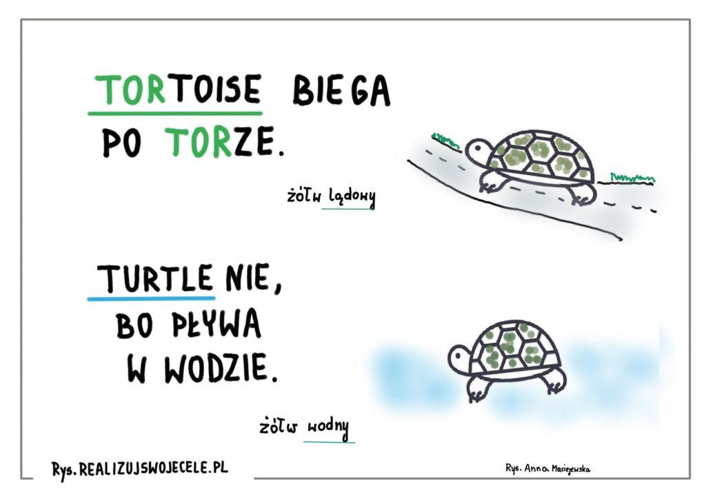 turtle tortosie język angielski